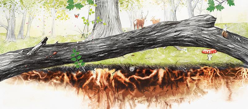 Albert Asensio El despertar del árbol